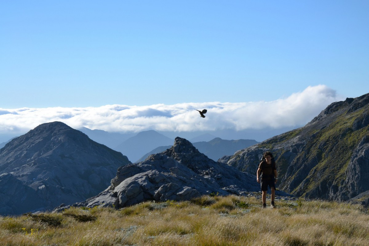 Backpacking New Zealand on a budget