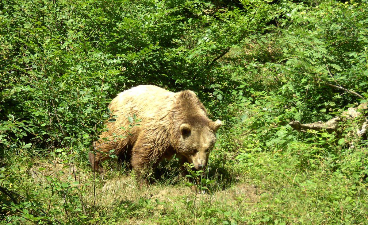 Urlaub Bayerischer Wald - Hotel, Wellness und Wandern im Nationalpark Bär Nationalpark Bayerischer Wald Tierfreigelände