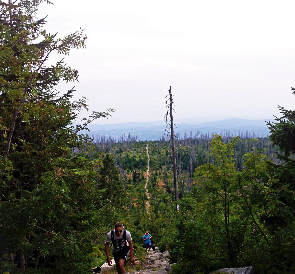 Urlaub Bayerischer Wald - Hotel, Wellness und Wandern im Nationalpark Lusen Nationalpark Bayerischer Wald Himmelsleiter